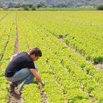 imprenditori agricoli