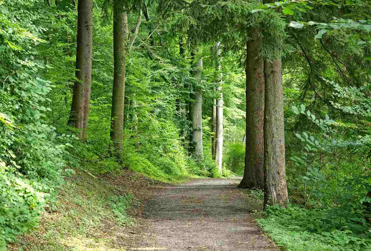 Concorso Guardia Forestale