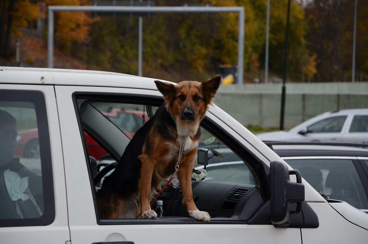 Multa animali domestici in auto