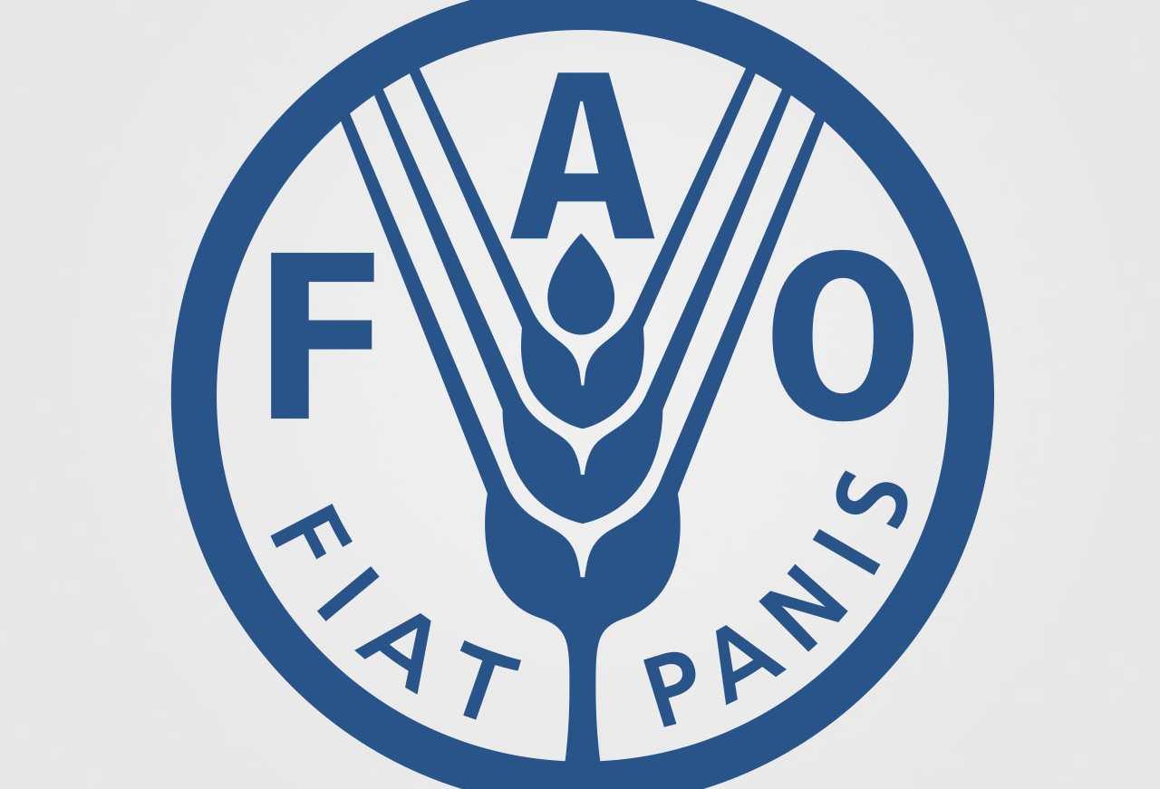 tirocini retribuiti FAO