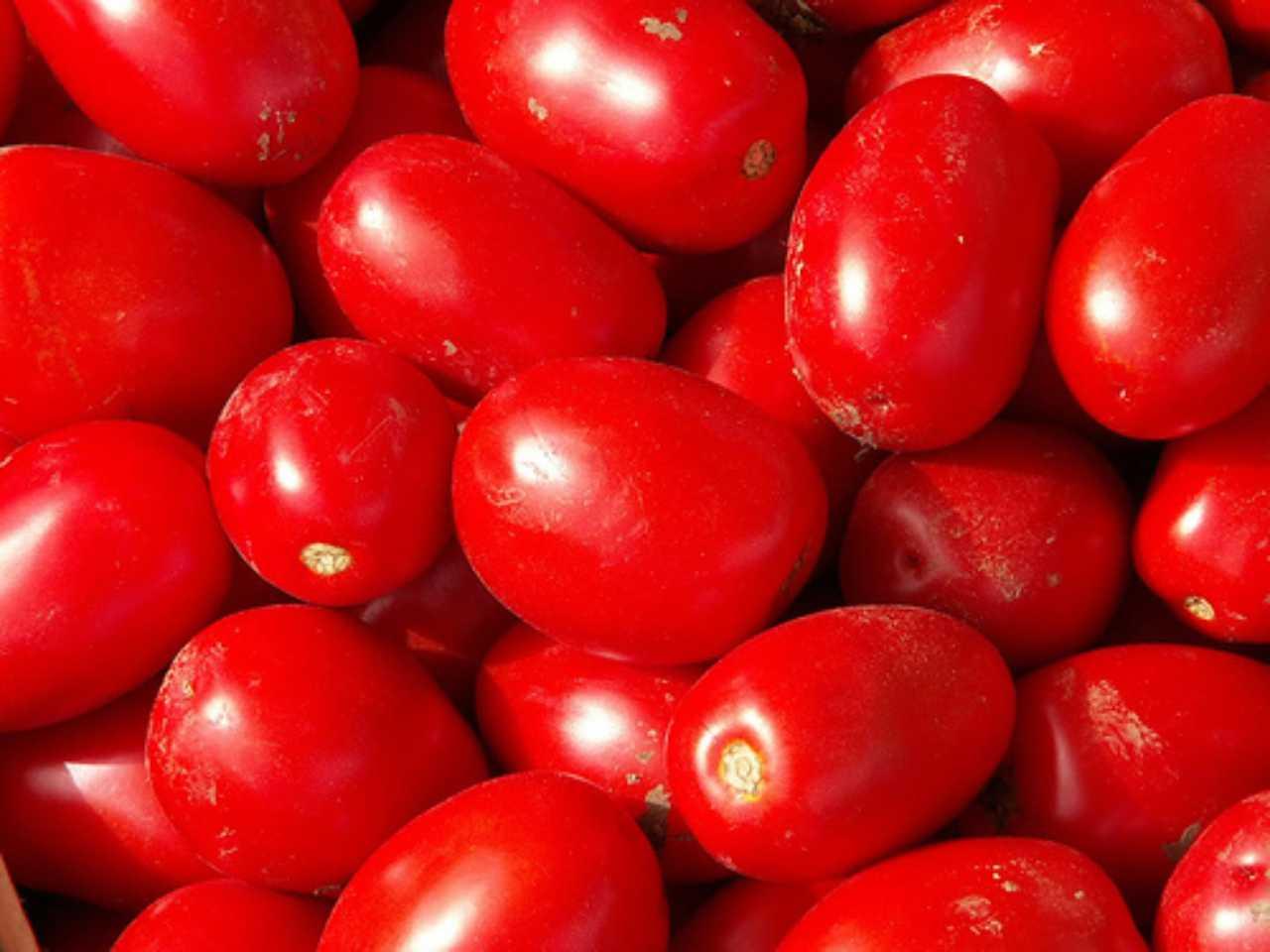 Concentrati pomodori