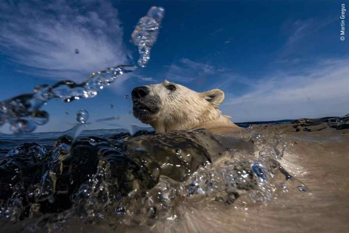 Wildlife Photographer of the year foto
